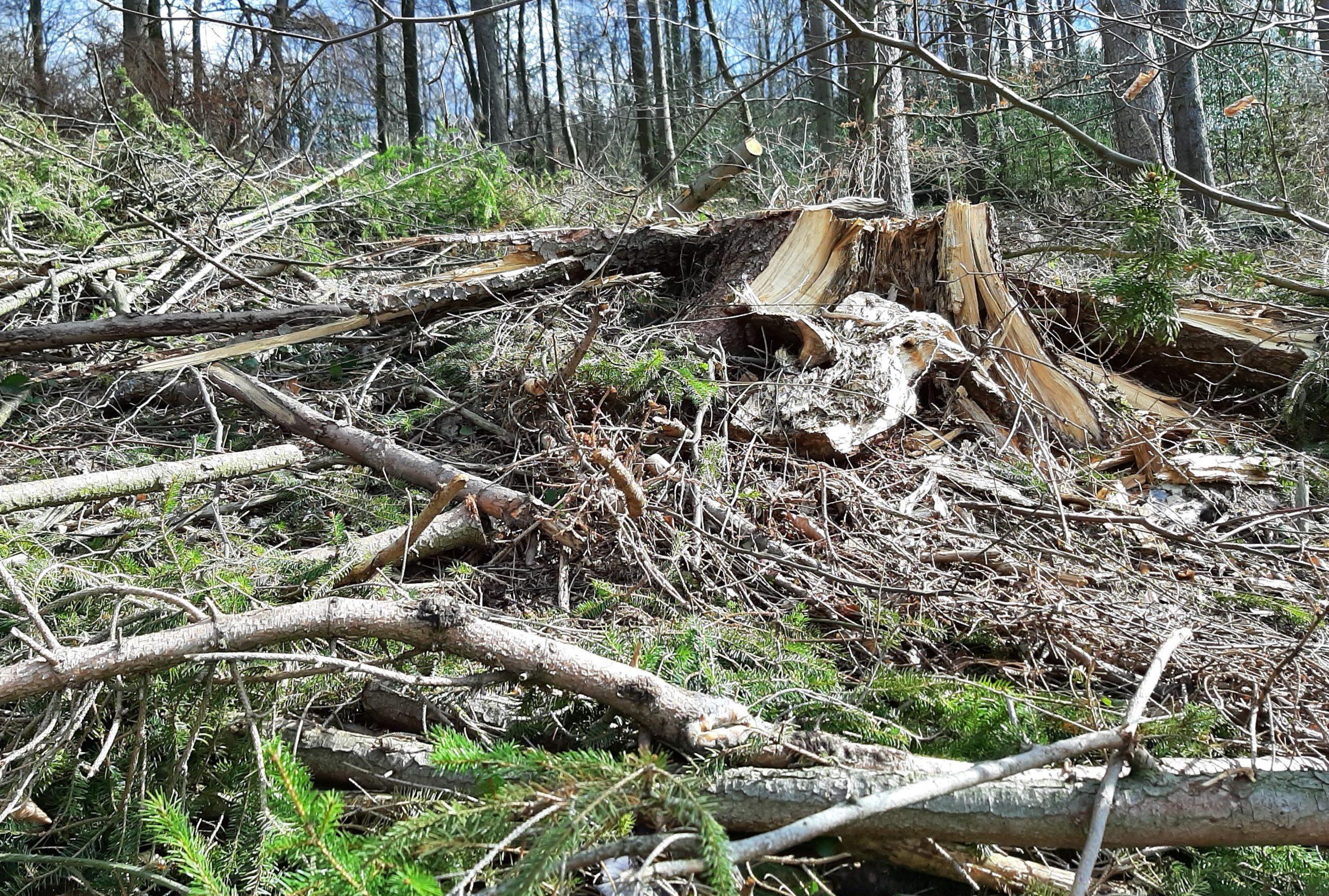 Zerstörung des Waldes